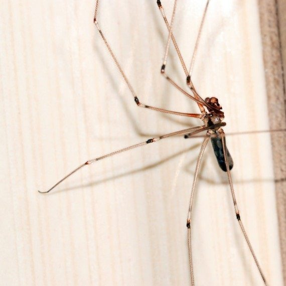 Spiders, Pest Control in Grays, Badgers Dene, RM17. Call Now! 020 8166 9746